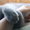 Il gatto percepisce la tua energia, anzi la vede e valuta se tu potrai amarlo e sei affidabile