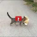 Gatto ruba peluche dai vicini di casa