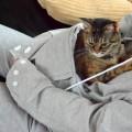 La Felpa con Marsupio che il Tuo Gatto Vorrà Assolutamente.