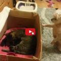 Cane muore dalla voglia di vedere i piccoli gattini appena nati.