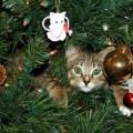 Hai un gatto ? Rinunciare alle decorazioni di Natale non è necessario