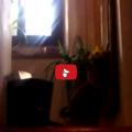 Gatto rimprovera i genitori perché sono tornati tardi.