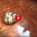Ogni gatto va matto per le olive, perché ?