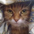 Perché il nostro gatto a volte sembra evitarci ?