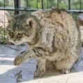 Vive a Comeana la gatta più vecchia del mondo