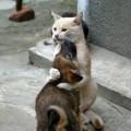 La sbalorditiva psiche e intelligenza dei gatti