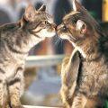 I gatti riconoscono i loro parenti? Ecco la risposta dell'etologo
