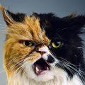 Perché non tutti i gatti sono disposti a instaurare un'amicizia con un essere umano