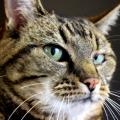 Un gatto capisce se usiamo un parola è offensiva nei suoi confronti ?