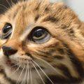 Come si fa a chiedere a un gatto il permesso di accarezzarlo