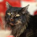 Un Gatto torna a casa alla fine dei suoi giorni dopo 7 anni