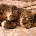 I segni che indicano che il gatto avrà una lunga vita
