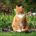 Questi fiori hanno ucciso il mio gattino:se avete un micio non teneteli in casa