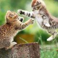 Stanco degli interminabili litigi tra i tuoi gatti?