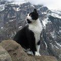 Sciatore si perde in montagna, un gatto gli mostra la strada per tornare all'ostello