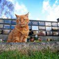 E' venuto a mancare Barney, il gatto che confortava le persone al cimitero