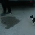 Accumoli, mamma gatta terremotata prende cibo per i cuccioli nascosti e commuove i volontari