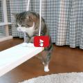 Quando un gatto si mette in mente di fare qualcosa, non si arrenderà