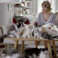 """La donna dei gatti più comunemente """"gattara"""""""