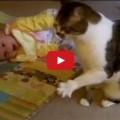 Gatta Baby sitter