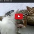 Gattino tenta di svegliare il fratellino che dorme