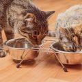 Ciotola per gatti: è giusto usarla?