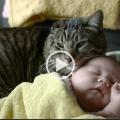 Gatti e bambini per una serena convivenza