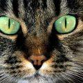 Un consiglio d'oro su come entrare in piena sintonia col vostro gatto