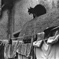 Il gatto è una creatura indipendente, che non si considera prigioniera dell'uomo