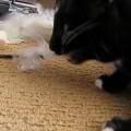 Comportamenti anomali del gatto: come identificarli