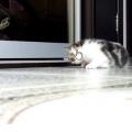 Gattini dal vivo in Live Stream