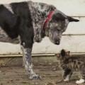 Max e Ralphee: l'amicizia tra il cane e il gattino disabile