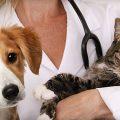 Permesso retribuito per cure di cani o gatti: ecco quando spetta