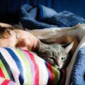 I motivi per cui il gatto ama dormire con te