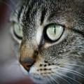 I gatti sono dotati di chiaroveggenza ?