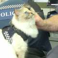 In Nuova Zelanda arriva la prima gatta poliziotta in servizio