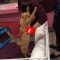 E' difficile convivere con un gatto con handicap