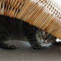Fate attenzione quando il gatto inizia a nascondersi