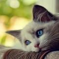 La capacità olfattiva di un gatto è in grado di capire che qualcosa non va.