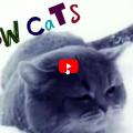 Gatti pazzi per la neve