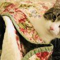 Spende 19 mila dollari per il trapianto di rene del suo gatto 17 enne e adotta il donatore