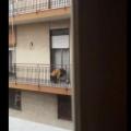 Gatto maltrattato dalla sua umana salvo grazie a un video. La storia