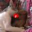Che spettacolo vedere cane e gatto che si adorano