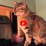 Scherzi da gatto