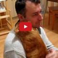 Quanto amore può dare un gatto?