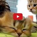 Un gattino molto pigro ....