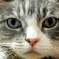 Perché con un gatto si vive meglio