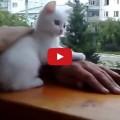 Gattino molto premuroso