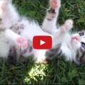 Gatto che ride come un bambino