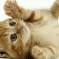 Se un gatto randagio entra in casa tua è perché tu hai bisogno di aiuto